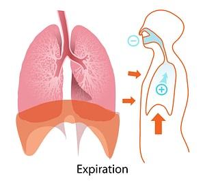 exhalation yoga anatmony