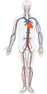 blood circulation yoga