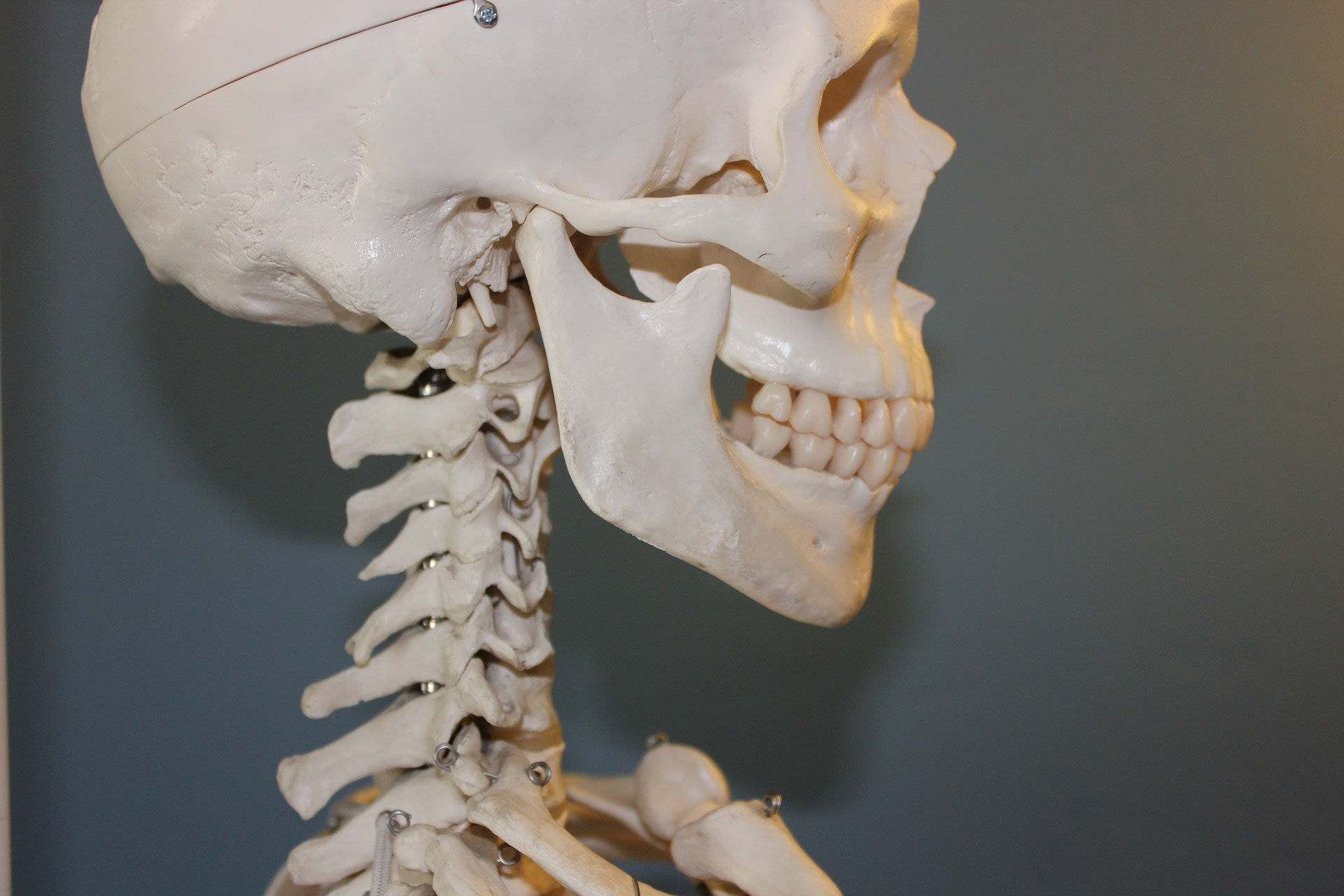 cervicals side view skeleton